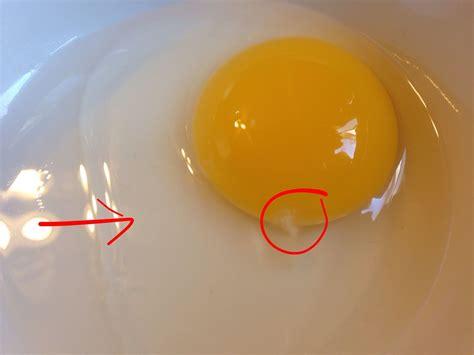 fertilised duck eggs vit lon what does a fertilized cracked open duck egg look like