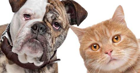 fotos animales juntos 191 el perro y el gato pueden vivir juntos
