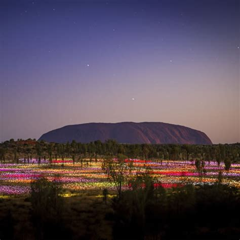 a at field of light luxury uluru special 5 uluru accommodation ayers