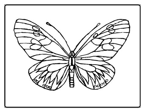 types of butterflies coloring pages butterfly coloring pages 11 designs pinterest