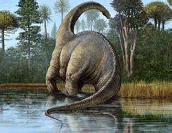 Fosil Gajah Daging aneka rekor dinosaurus koleksi hewan purba