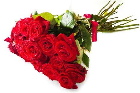 foto fiori rosse fiori rosse fiori di piante rosse fiori