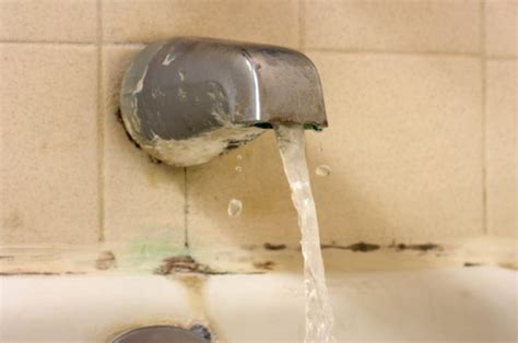 what is black mold in bathroom black mold in bathroom cause dangers and how to get rid