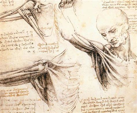 biography of leonardo da vinci inventions leonardo da vinci drawings online drawing lessons