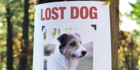 how are dogs considered puppies how to find a lost things you t considered huffpost
