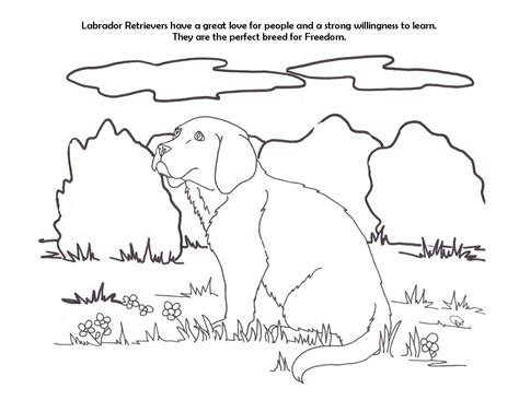 labrador coloring pages labrador retriever coloring pages page image clipart