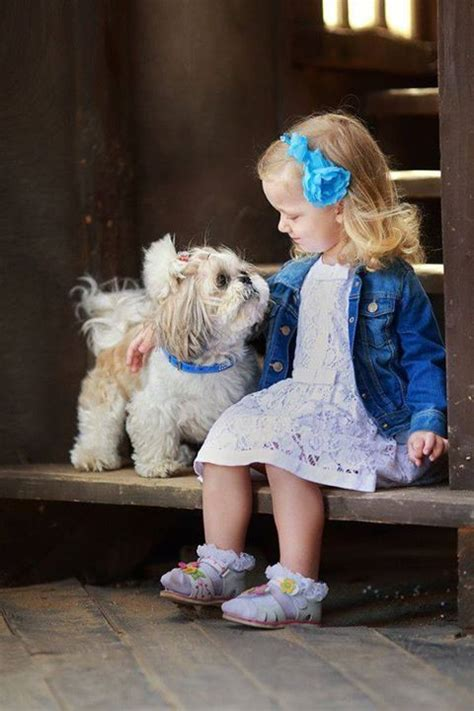 shih tzu with children 12 reasons why you should never own shih tzus