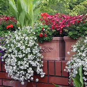 welche blumen sind winterhart balkonpflanzen pflege standort winterhart 252 berwintern
