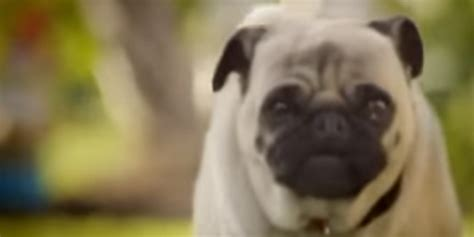 doritos pug commercial doritos bowl commercial 2011 pug s