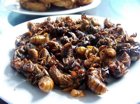 cuisine insectes comestibles recette d insecte comestible infos st jo