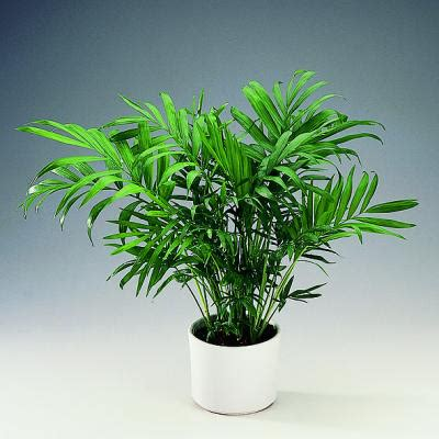good house plants which plants are safe and not safe for cats natural