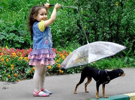 fuzzy nation pug umbrella 25 best ideas about umbrella on leash cool stuff and facts