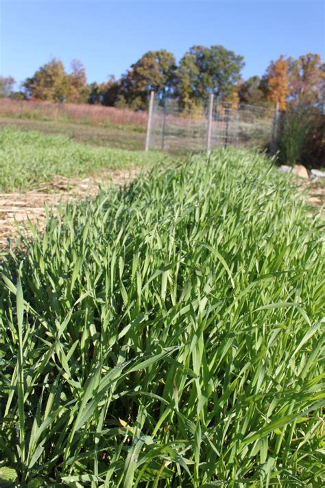 4 Planting Cover Crops Old World Garden Farms Best Cover Crop For Vegetable Garden
