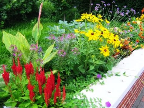 sun border plants 28 images top new perennials for