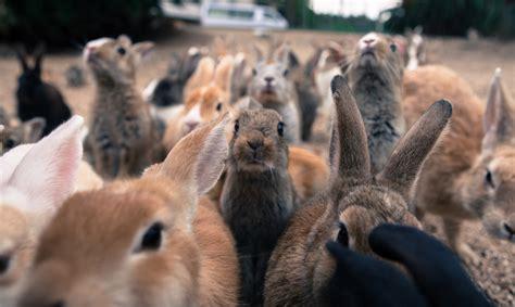 scoiattolo volante giapponese okunoshima l isola giapponese invasa da una colonia di