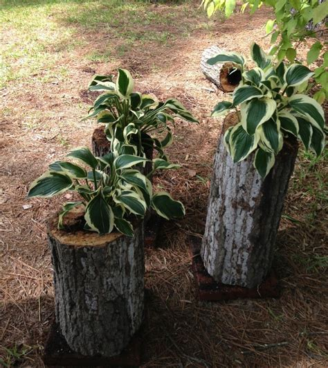 17 best images about tree trunk planter on pinterest