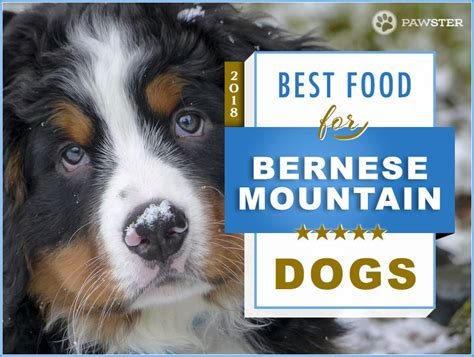 best food to feed your best food for bernese mountain dogs best mountain 2017