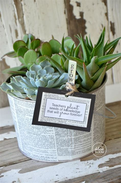 How To Propagate A Succulent Cookie And Kate - 25 unique best gifts for teachers ideas on