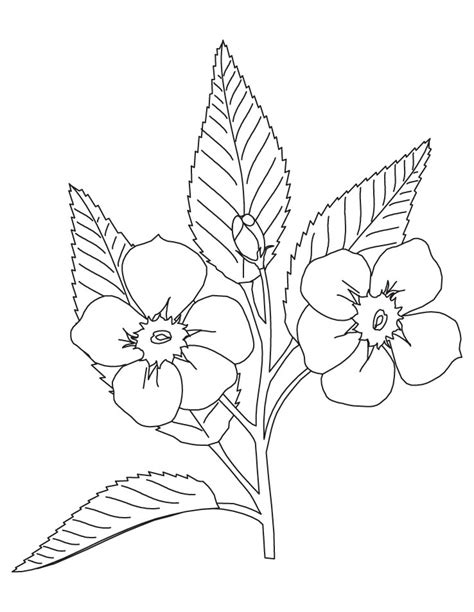coloring pages of apple blossoms free coloring pages of apple blossom