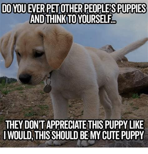 Cute Puppies Memes - 25 best memes about cute puppy cute puppy memes