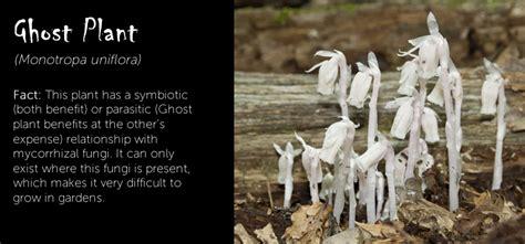 spooktacular plants  halloween ambius uk