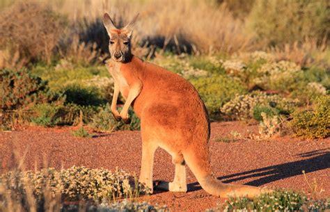 imagenes de animales que viven en el desierto desierto wikiquinto81