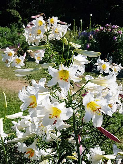 Garten Blumen by Gartenblumen Ein 220 Berblick 252 Ber Blumen F 252 R Den Garten