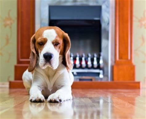 dog not eating dog not eating after other family dog died thriftyfun