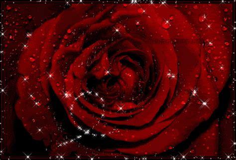 imagenes gif rosas rojas im 225 genes de rosas con movimiento para celular