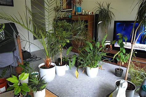 wohnung pflanzen umtopfmarathon mit allen pflanzen in der wohnung