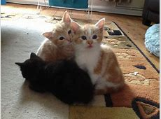 Cute Kittens for Sale | Chipping Norton, Oxfordshire ... Kittens For Sale