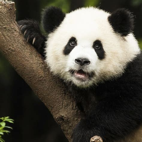 imagenes de animales lindos los 20 animales m 225 s bonitos del mundo