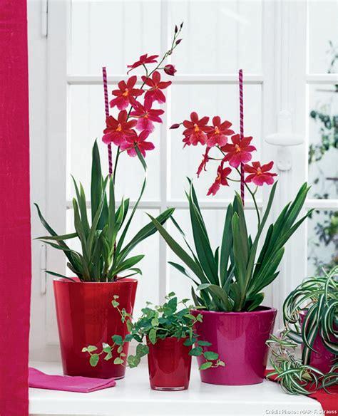 Plantes D Intérieur Sans Lumiere by Plante D Interieur Sans Lumiere Digpres