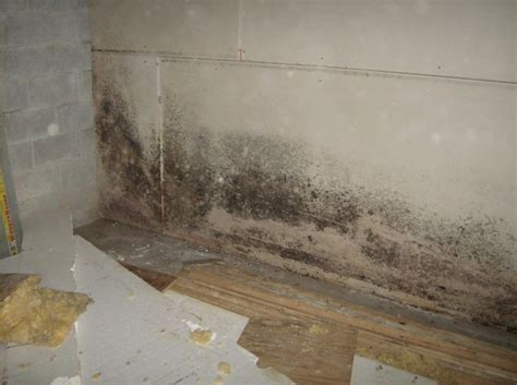 home mold remediation on removing bathroom mold for a