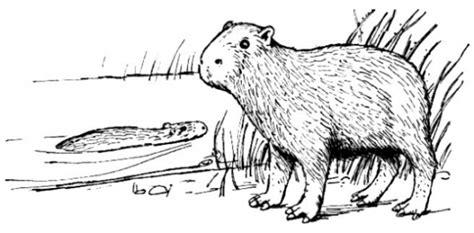 Capybara Coloring Pages For Kids Capybara Coloring Page
