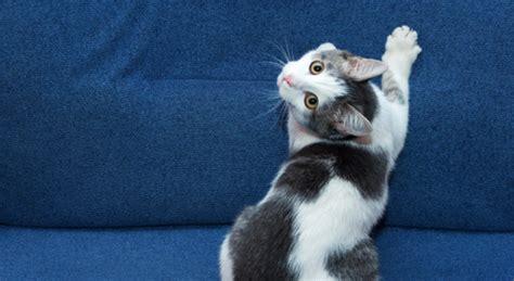 kat krabt aan behang ongewenst krabgedrag kat krabt aan meubels behang of tapijt