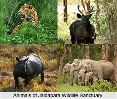 in search of sanctuary wildlife my books jalpaiguri district junglekey in image