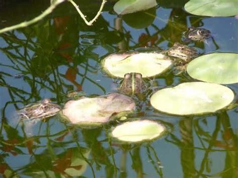 fiori acquatici nomi l ecosistema acquatico un grazioso laghetto stagno da