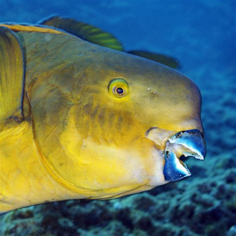 fish for life a multifaceted fish with a beak fascinating world
