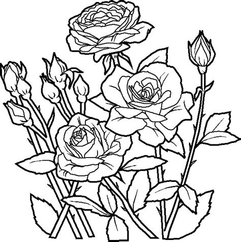 coloring pages flower rose may 2010 gt gt disney coloring pages