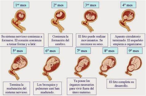 imagenes reales embarazo semana a semana embarazo semana a semana imagenes y video polloviral