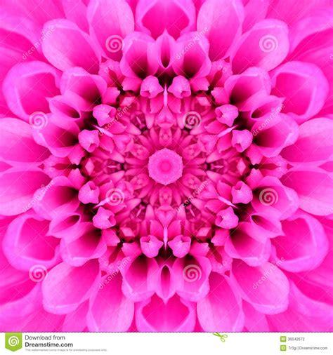 design flower center pink concentric flower center mandala kaleidoscopic