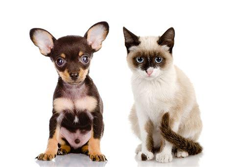 Fondos de Pantalla Gato Perro El fondo blanco Perro