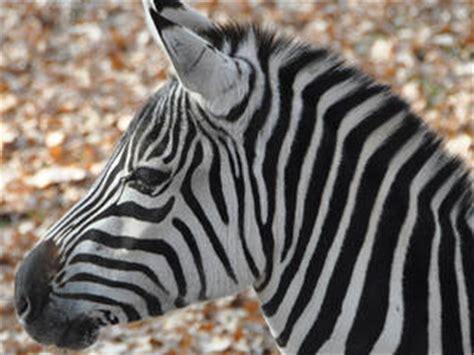 zoologischer garten neunkirchen saar zoo neunkirchen tierpark in neunkirchen saar