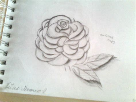 realistic rose drawing 2013 09 15 by ericaluv276 on deviantart