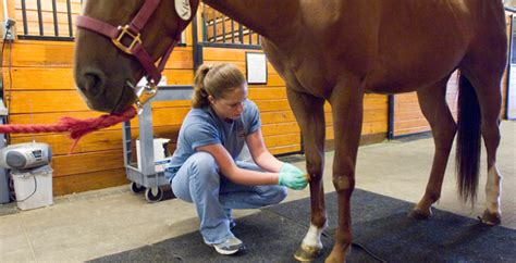Colorado State Veterinary School Dvm Mba by Dvm Important Application Dates