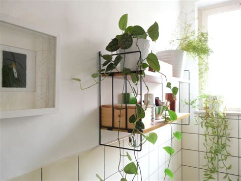 indoor bathroom plants 13 amazing ideas for your indoor plants love the garden