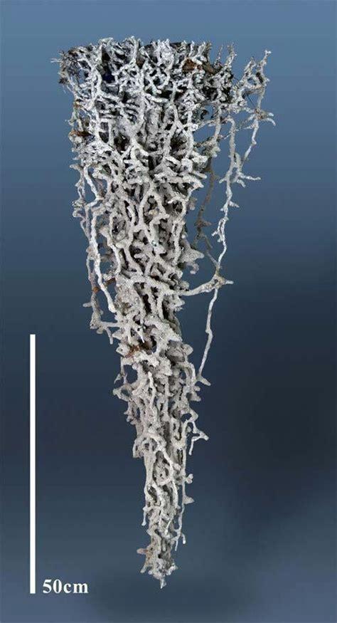 ant bed art aluminium cast of ants nest google search ma 06