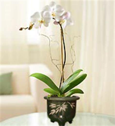 Anggrek Bulan Artificial Impor rangkaian bunga anggrek bulan segar dan artificial untuk