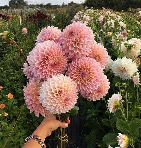Category Thanksgiving Decorating Ideas Home Bunch Dahlia Flower Garden